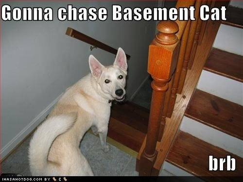 funny-dog-pictures-dog-going-to-chase-basement-cat.jpg