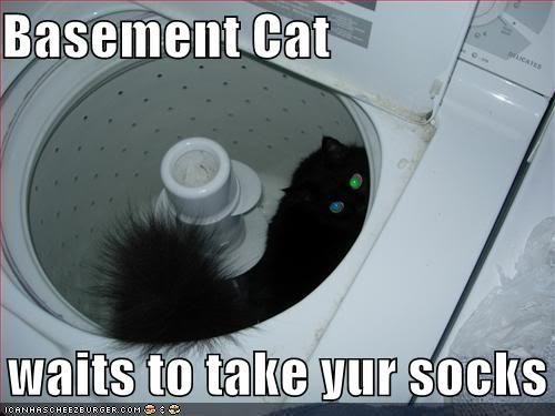 funny-pictures-basement-cat-will-take-your-socks-soon.jpg